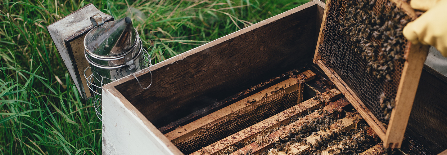 Beekeeping with a Flow Hive in the Canberra Region